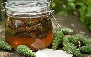 Целебная настойка из сосновых шишек на водке — лечебные свойства, правила приготовления и приема