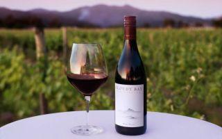 Вино Пино Нуар (Pinot Noir) — особенности, разновидности и культура употребления