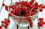 Как сделать вино из красной смородины в домашних условиях — простой, пошаговый рецепт