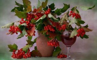 Вино из калины в домашних условиях — простой рецепт