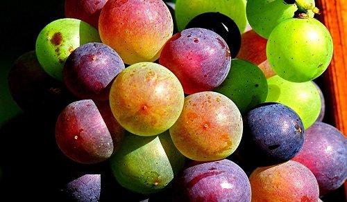 не дозревшие ягоды винограда