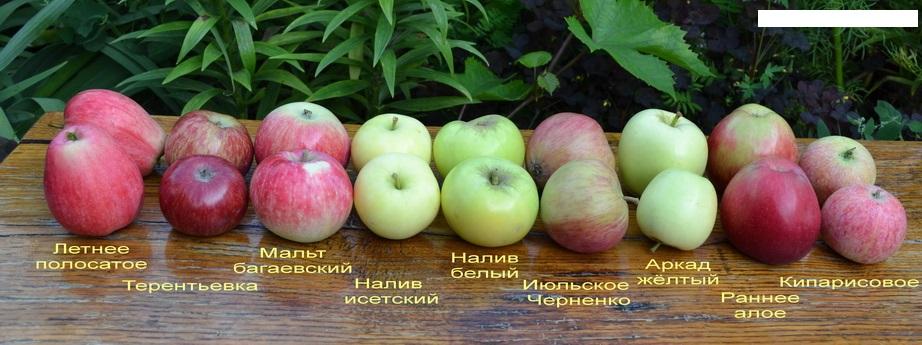 различные сорта яблок