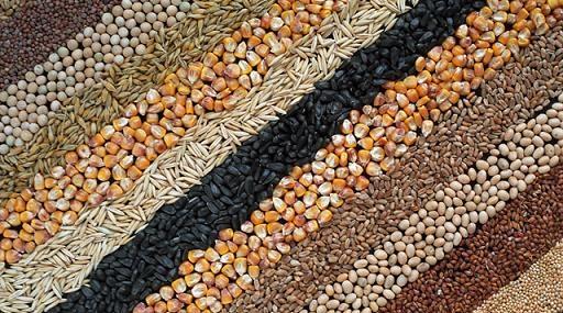 зерно злаковых культур